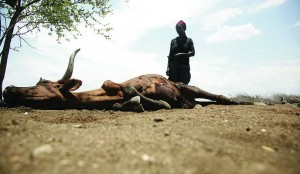 A woman watches her cow die in the drought-stricken Chisumbanje area.