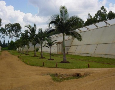 The greenhouses on the Cremer family's de Rus farm outside Chegutu prior to the farm takeover.  The property has been seized by Prosper Mabuya who, after returning from a posting in China, works in Zimbabwe's Ministry of Foreign Affairs.    Even while the Cremers and their family and workers were being forced to leave four generations of hard work, the invaders were destroying the green houses with angle grinders.  Once they'd crashed to the ground, they were sold off.  Nearly 300 workers and their families are now without work.  The owner and his wife have left Zimbabwe in the hope of rebuilding their lives elsewhere. Photo and information supplied by Ben Freeth in June 2015