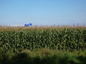 Maize_field_Breda_180905