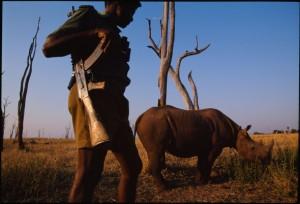A black rhino under guard in Matusadona National Park, Zimbabwe. Photograph by Chris Johns/National Geographic Creative.