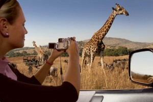 Giraffe-Car2-1024x682