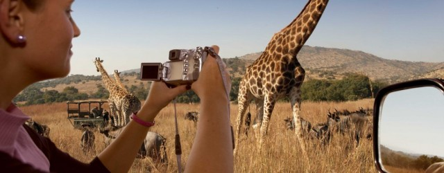 French scientists in Zimbabwe use facial recognition technology to ID giraffes