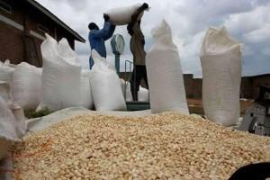 maize-zambia