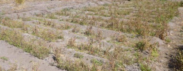 New Livelihoods in Zimbabwean Communities Help Reduce Land Degradation, Poaching