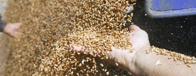 Zimbabwe's wheat supplies 'drastically' decline