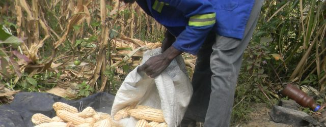 Food Security Situation in Zimbabwe