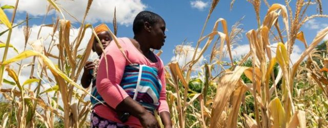 UN says Zimbabwe's cash shortage hurts aid delivery efforts