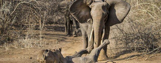 Zimbabwe's Rescued Wildlife Joins Jerusalema Dance Challenge
